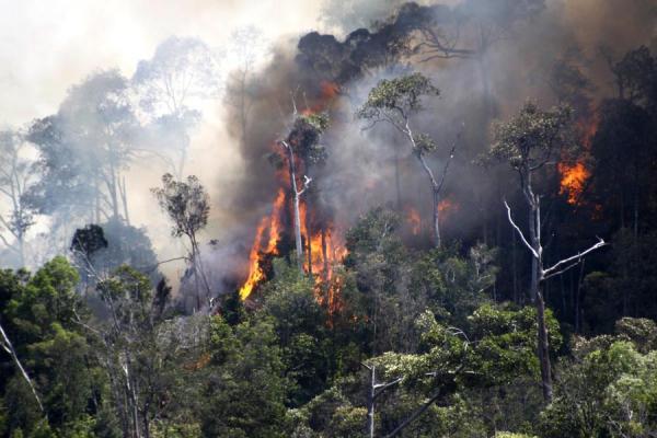WebGIS Kementerian Lingkungan Hidup dan Kehutanan (KLHK)