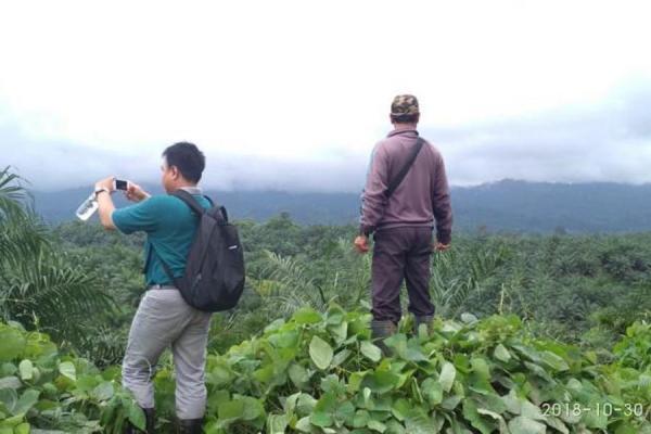 Hasil Riset IUCN, Kelapa Sawit 9 Kali Lebih Efisien dalam Penggunaan Lahan