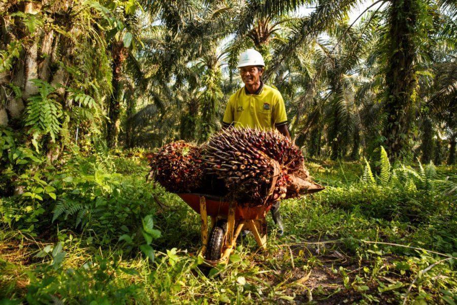 Menteri Pertanian: Potensi Sawit Mesti Dikembangkan Untuk Genjot Ekspor