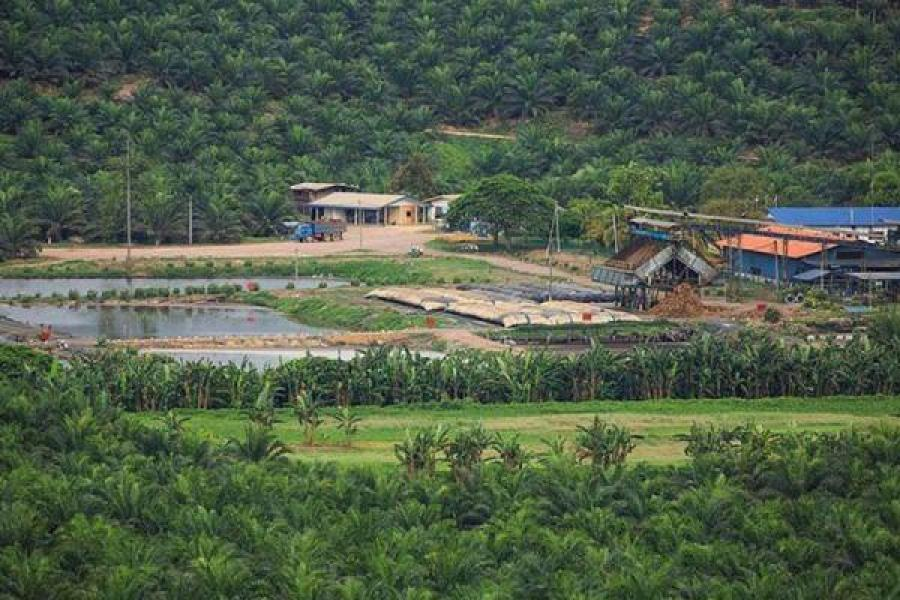 Generating Electricity from Biogas of Palm Oil Mill Effluent, Why Not?