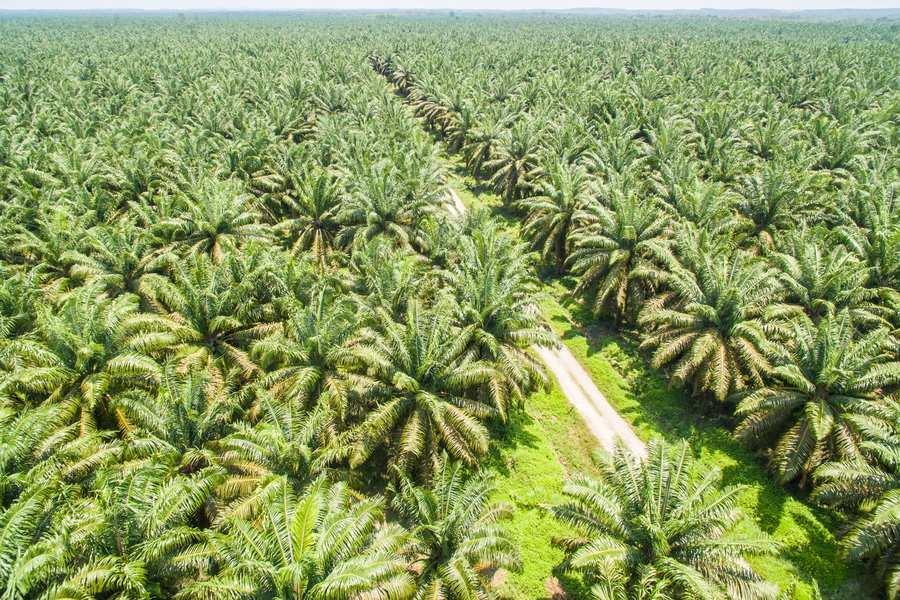 Astra Grup Perluas Digitalisasi Perkebunan Sawit di Masa Pandemi