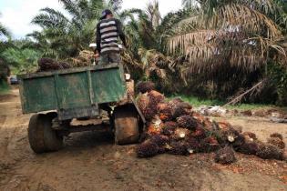 jambi-kekurangan-pabrik-pengolahan-sawit-apa-dampaknya-ke-petani