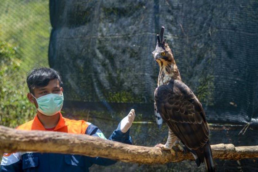 Wilmar Group Lakukan Konservasi Burung Pemangsa di Kalimantan