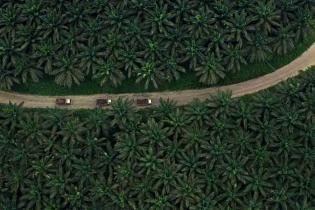 indonesia-kembali-jadi-eksportir-terbesar-minyak-sawit-dunia